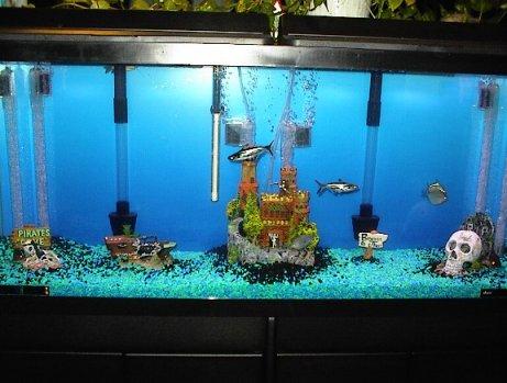 Fish Tank Filter on Cory S Aquarium