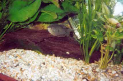 Tropical fish centre eclipse 39 s aquarium for Eclipse fish tank