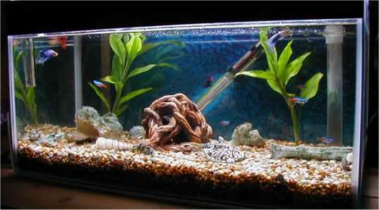 Tropical fish centre jim 39 s aquarium for Jims exotic fish