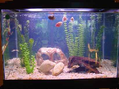 tropical fish tanks