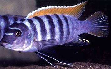 Photo the cichlid exchange
